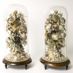 Pair of 19th Century Shell Bouquets, under glass domes on wood stands