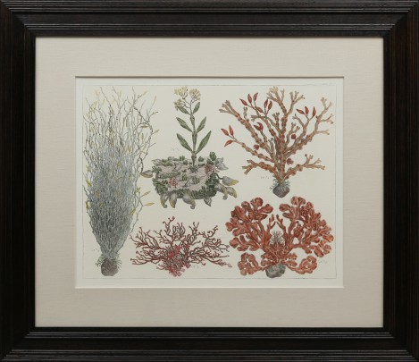 Group of Three 18th C. Hand Colored Coral Species Engravings