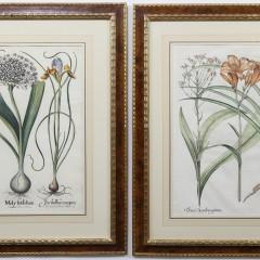 111-4270 Botanical Engravings_8165 2