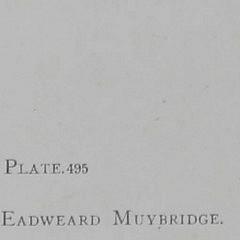 Animal Locomotion – Plate 495 by Eadweard Muybridge – Copyright 1887