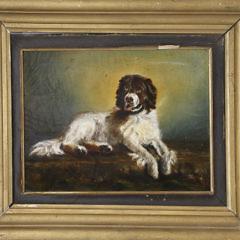41-4800 Portrait of a Newfoundland Rescue Dog A_MG_5409