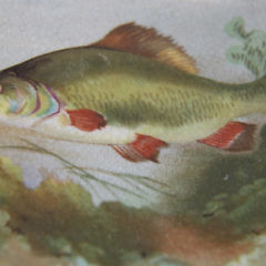 Set of Eleven 19th c. Fondeville Ambassador Ware Fish Decorated Luncheon Plates