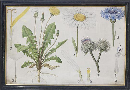 29-4795 Botanical Specimens Framed Chromolithograph A_MG_3201
