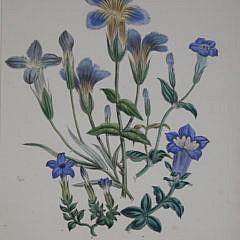 Set of Five 19th Century English Floral Botanical Prints