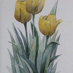 "Roy Bailey Nantucket Miniature Watercolor, ""Yellow Tulips"""