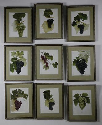 """36-3890 Set of Nine Vintage Framed, """"Grape's of New York"""" Prints A_MG_4305"""