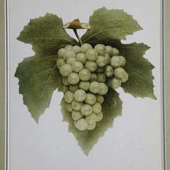 """Set of Nine Vintage Framed, """"Grapes of New York"""" Prints"""