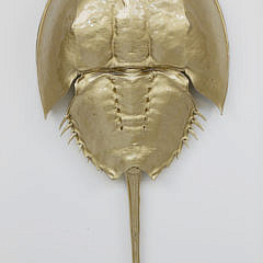 Gilded Horseshoe Crab Shadow Box
