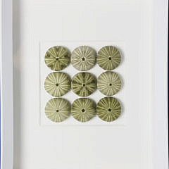 "Christopher Marley ""Sea Urchin"" Shadowbox and Framed Sand Dollars"