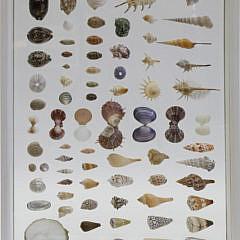 39-3887 Seashells A_MG_0564