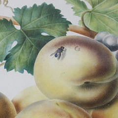 """English Still Life Watercolor """"Fruit on a Marble Surface"""", mid 19th Century"""