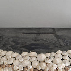 Contemporary Shell Encrusted Wall Bracket