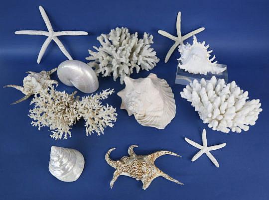 104-4935 Tropical Shells A_MG_0863