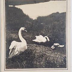 2-4958 Nantucket Family Photo A
