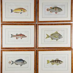 3-4734 Fish Lithographs A_MG_2527