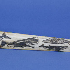 Scrimshaw Swordfish Bill