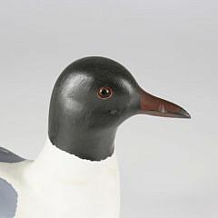 American Black-headed Gull Decoy, Contemporary