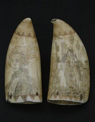 1-4976 Pair Whale Teeth Mexican American War A_MG_9976