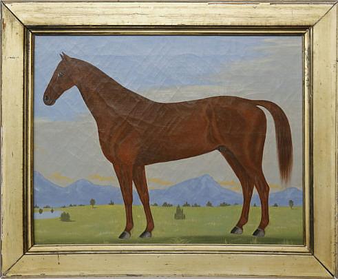 20-4901 Chestnut Arab A_MG_0446