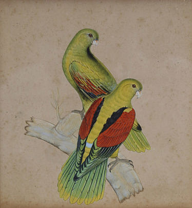 1590-54 Gouache and Ink Picture of Parrots A_MG_2246 2